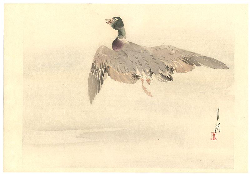 12 Kamo, Duck